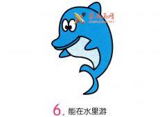 彩色海豚的简笔画画法教程详解