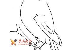 站在树枝上的小鸟的简笔画画法图片