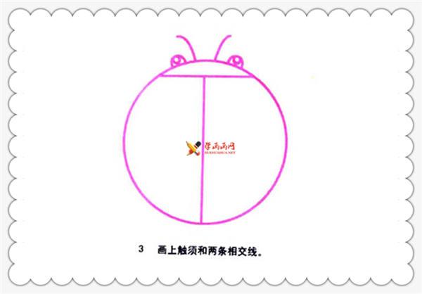 七星瓢虫简笔画分解步骤(3)