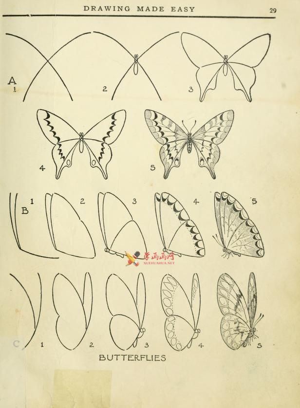 超简单的蝴蝶的画法(1)