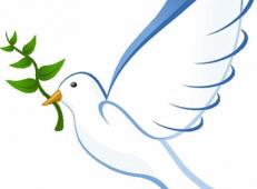 和平鸽简笔画图片_和平鸽和橄榄枝图片