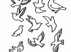 儿童画鸽子的简笔画图片