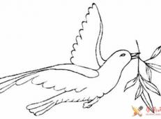 和平鸽叼着橄榄枝简笔画