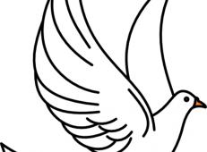 儿童画展翅的鸽子简笔画作品