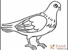 儿童简笔画作品,一只站着的鸽子