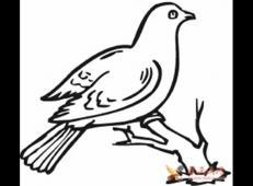 站在树枝上的鸽子简笔画