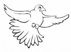 简笔画展翅的鸽子