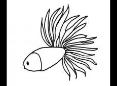 漂亮的孔雀鱼的简笔画图片6幅