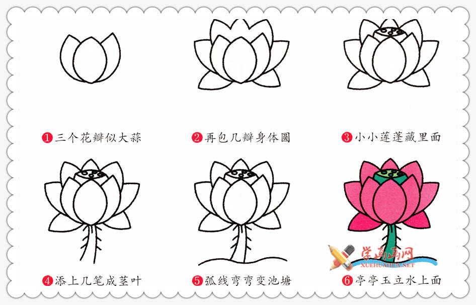 彩色荷花简笔画及步骤画法(1)