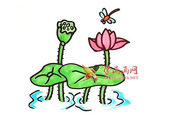美丽的荷花的简笔画画法教程【彩色】