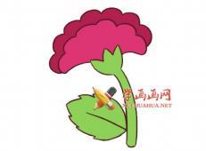 美丽的鸡冠花的简笔画图片