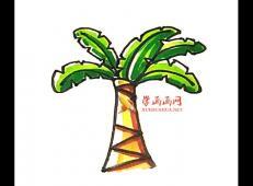 芭蕉树的简笔画画法教程赏析【彩色】