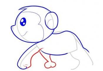 怎么画猴子-猴子简笔画步骤5