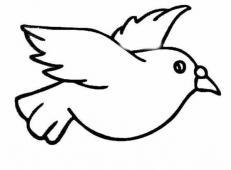 白鸽子简笔画图片