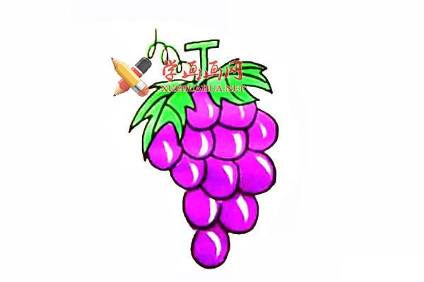 简单的步骤教你画葡萄的简笔画【彩色】