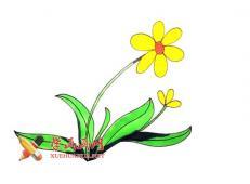 一步步的教你学会画太阳花的简笔画