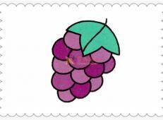 水果简笔画:葡萄的画法