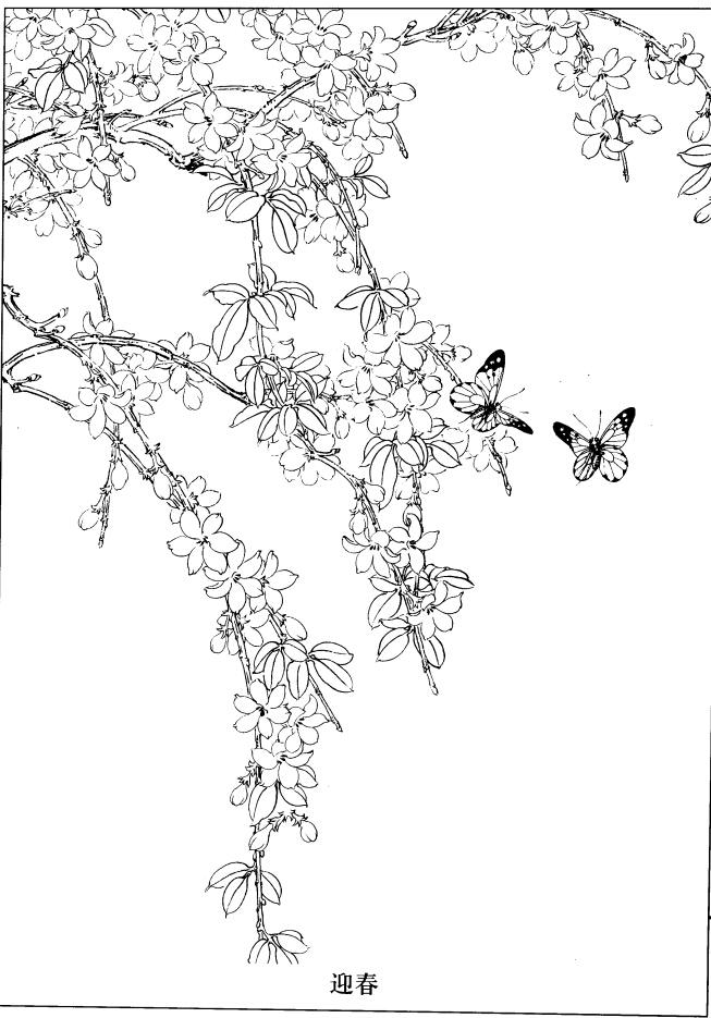 迎春花线描图(1)