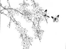 白描花卉-迎春花的画法