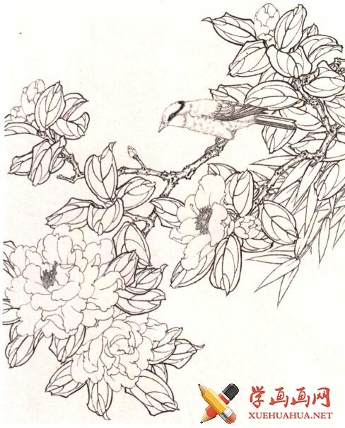 工笔花鸟画《茶花鸟》教程(1)