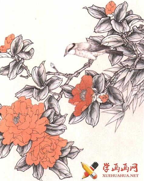 工笔花鸟画《茶花鸟》教程(2)