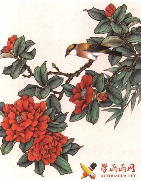 工笔花鸟画《茶花鸟》教程(4)