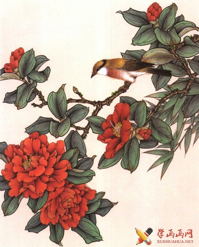 工笔花鸟画《茶花鸟》教程(5)