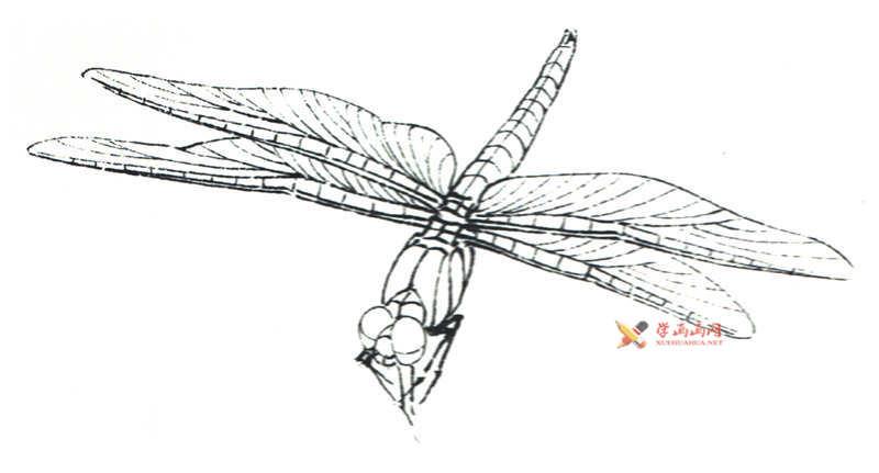 工笔画昆虫教程_蜻蜓的设色过程(1)