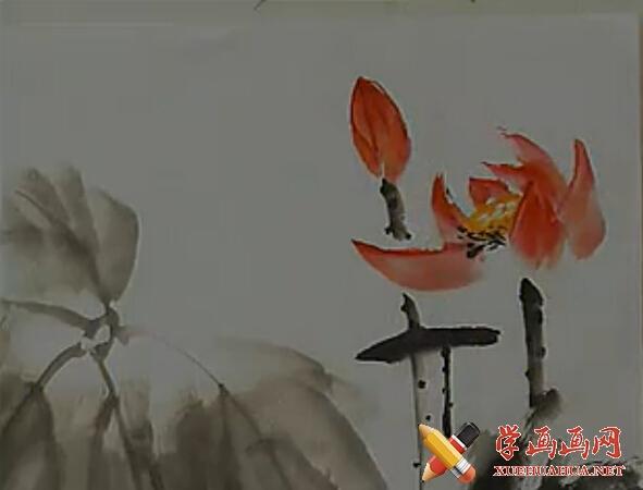 视频:国画教程荷花的画法