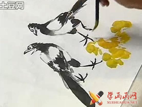 跟徐湛学中国画教程全集61_喜鹊鸟的画法(1)