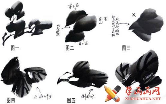 水墨画写意牡丹的画法(3)