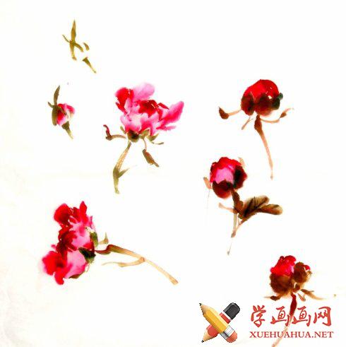 水墨画写意牡丹的画法(4)