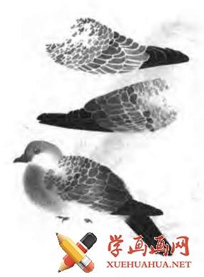 国画怎么画鸟(2)