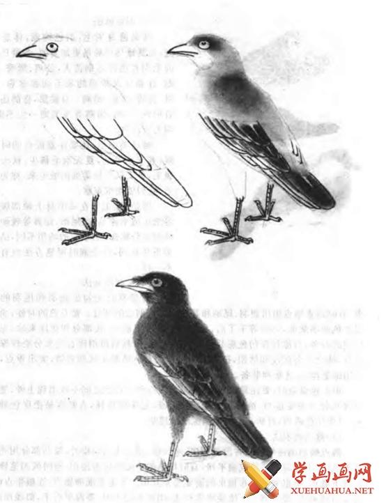 国画怎么画鸟(3)