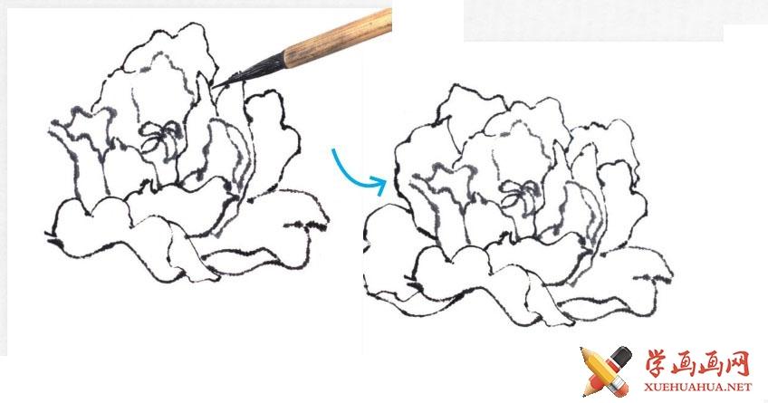 国画牡丹花头的画法步骤教程(勾染法)(7)