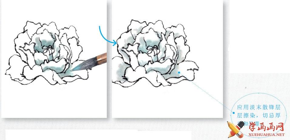 国画牡丹花头的画法步骤教程(勾染法)(9)