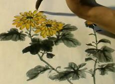 中国画菊花的画法视频教程
