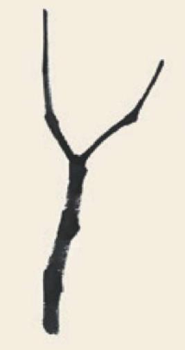 儿童学画画教程_国画杨树的简单画法(1)