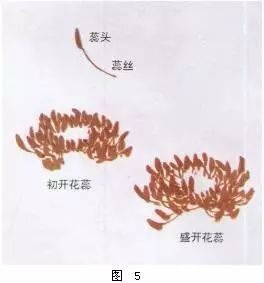 国画牡丹画法详解(5)