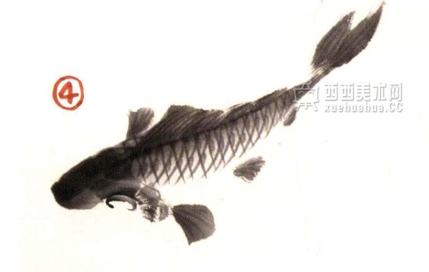 国画教程_水墨画鲤鱼的画法步骤(4)