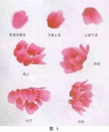 国画牡丹画法详解(3)