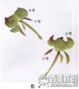 国画牡丹画法详解(4)