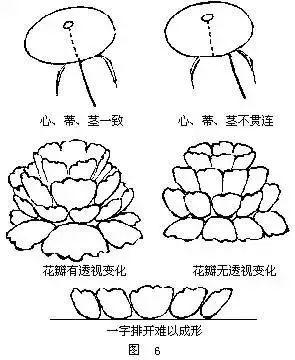 国画牡丹画法详解(6)