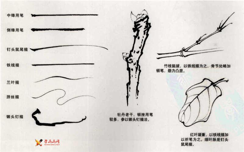 白描牡丹叶子的画法步骤