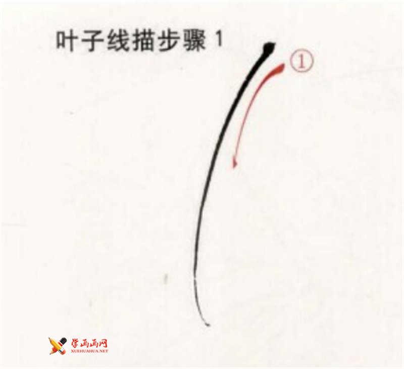 工笔白描牡丹的画法(3)
