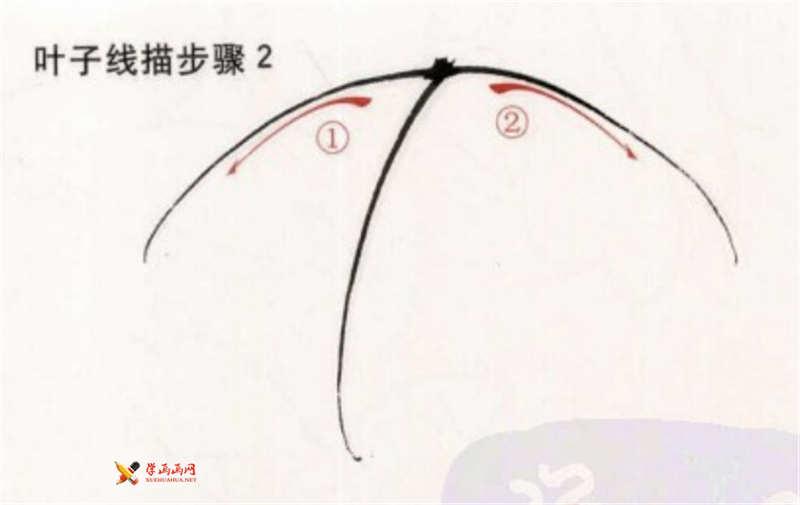 工笔白描牡丹的画法(4)
