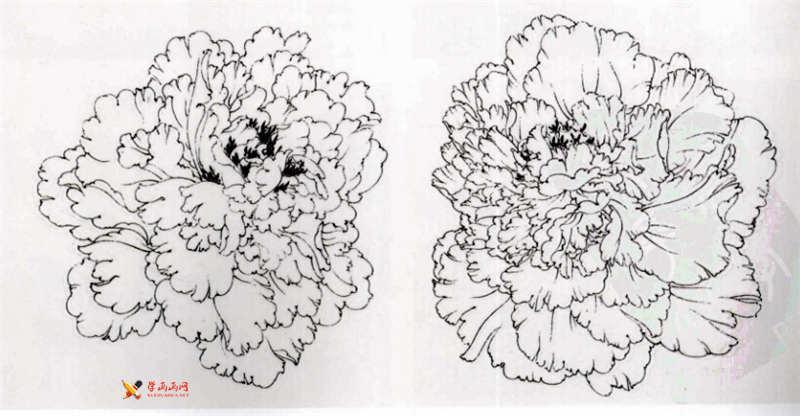 工笔白描牡丹的画法(9)