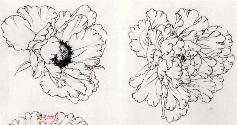 工笔白描牡丹的画法(11)