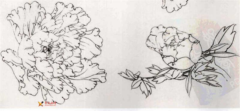 工笔白描牡丹的画法(12)