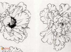 国画教程:工笔白描牡丹的画法